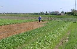 Thiếu vốn phát triển sản xuất nông nghiệp sạch