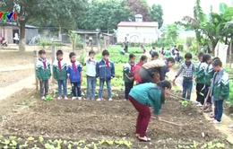 Lào Cai: Xuất hiện mô hình trường học nông trại