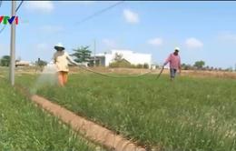 Nông dân ĐBSCL lo cạn kiệt nguồn nước ngầm tầng nông