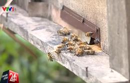 Đập phá, cản trở người ngoại tỉnh đến nuôi ong tại Hà Giang
