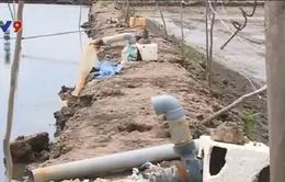 Lấy nước ngầm nuôi tôm thẻ ở Đồng Tháp - Lợi bất cập hại