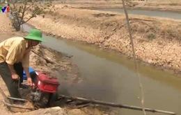 45% diện tích nuôi tôm ở Cà Mau bị bỏ hoang