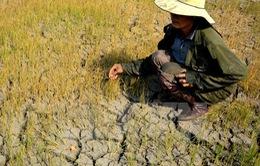 Giải pháp cho tranh chấp tôm - lúa