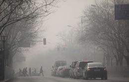 WHO: 1/4 ca tử vong liên quan tới ô nhiễm