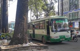 Cấm hành nghề tài xế xe bus tấn công người đi đường