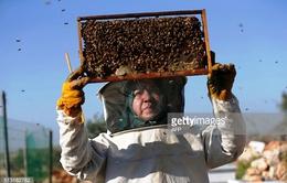 Phụ nữ Bờ Tây Palestine đổi đời nhờ nghề nuôi ong