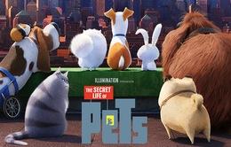 The Secret Life Of Pets - Khi thú cưng nổi loạn...