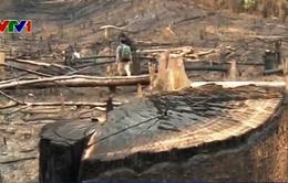 Quảng Nam: Phá hơn 25ha rừng để trồng keo