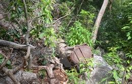 Nhóm lâm tặc quá khích chém tử vong một cán bộ quản lý rừng