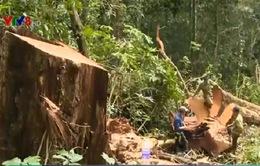 Gia Lai kiểm điểm cán bộ địa phương để mất rừng