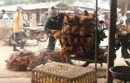 """Nhập gà Trung Quốc: Người nuôi mất nghiệp, người tiêu dùng ăn """"rác""""?"""