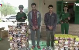 Bắt giữ vụ vận chuyển 221 kg pháo lậu tại Quảng Bình