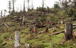 """Đóng cửa rừng: Đại ngàn Tây Nguyên sẽ ngừng """"chảy máu""""?"""