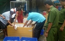 Phát hiện 850kg cá điều hồng thối trong quán cơm công nhân