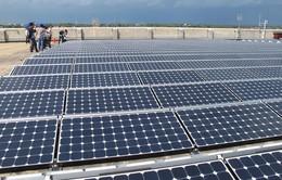 Terra Wood muốn đầu tư 400 triệu USD vào các dự án điện gió, điện mặt trời tại Quảng Ngãi