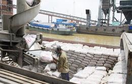 Philippines qua mặt Bangladesh về nhập khẩu xi măng Việt Nam