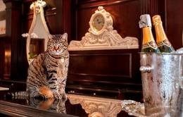Khách sạn tuyển trâu, chim công, mèo chào đón du khách