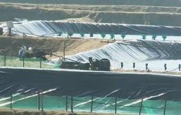 Phú Yên: Xử lý dứt điểm tình trạng nuôi tôm trái phép trong tháng 7