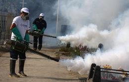 Brazil quyết tâm ngăn chặn virus Zika
