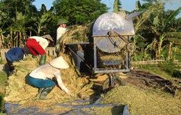 Đi tìm phương án phát triển thương hiệu gạo Việt Nam (17h30, 14/10, VTV1)