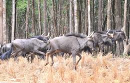 Bác thông tin hàng ngàn động vật chết tại vườn thú Vinpearl Safari