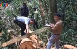 Bắt đối tượng phá rừng chống người thi hành công vụ