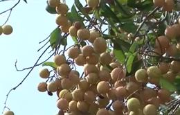Xuất khẩu rau quả tiếp đà tăng trưởng