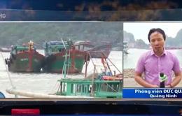 Quảng Ninh chủ động phòng chống bão số 7