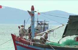 Ngư dân thoát chết trong bão Chanchu vẫn kiên cường bám biển