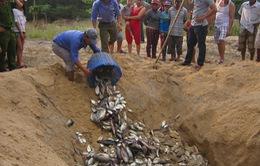 Chính phủ chỉ đạo rà soát các dự án xả thải ra biển