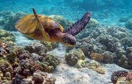 Hơn 1/3 rặng san hô lớn nhất thế giới bị tẩy trắng do biến đổi khí hậu