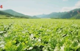 Làm nông nghiệp bằng trái tim - Bí quyết thành công của người Nhật