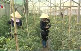 Lâm Đồng tạo chuỗi sản xuất rau an toàn