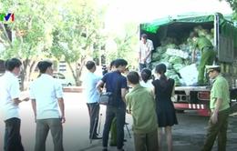 Nghệ An: 8 tấn rau củ nhập lậu bị phát hiện được vận chuyển chui