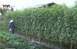 Mô hình chuỗi lòng tin trong sản xuất hữu cơ tại Sóc Sơn
