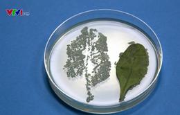 Nguy cơ nhiễm khuẩn đường ruột từ rau sống đóng gói