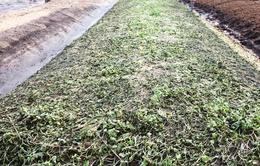 TT-Huế: Đề xuất hỗ trợ để khôi phục vùng rau xanh sau lũ