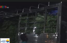 Mạng lưới phân phối rau muống bào ngâm hóa chất đi các tỉnh phía Nam