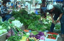 Khan hiếm rau mùa lũ ở miền Trung