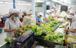 Xuất khẩu rau, quả 9 tháng tăng trên 1,8 tỷ USD