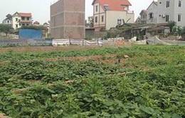Yêu cầu xử lý vi phạm về đất đai tại huyện Đông Anh, Hà Nội