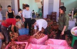 Xuất khẩu vải thiều qua cửa khẩu Lào Cai đạt hơn 10 triệu USD