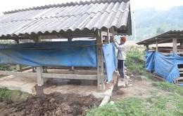 Quảng Trị chủ động chống đói, chống rét cho đàn gia súc