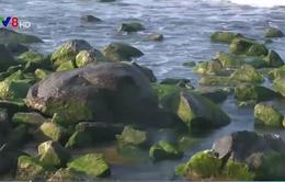 Kè chắn sóng Xóm Rớ thành bãi đá rêu xanh hút hồn du khách