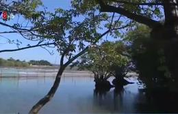 Người đàn ông 30 năm âm thầm giữ rừng Rú Chá