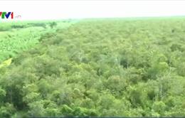 Cà Mau tăng cường máy bơm chữa cháy cho các chủ rừng U Minh Hạ