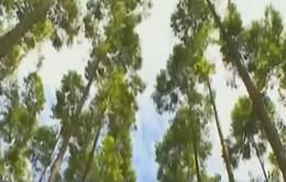 Na Uy - Quốc gia đầu tiên cấm hoàn toàn khai thác rừng