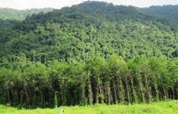 Quảng Nam: Trồng rừng thay thế diễn ra chậm chạp