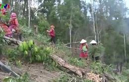 Gia tăng tình trạng phá rừng dịp giáp Tết tại Tây Nguyên