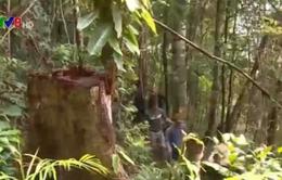 Quảng Nam: Tồn đọng kinh phí chi trả dịch vụ môi trường rừng